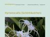 hymenocallis