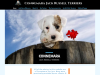 Connemara Terriers | Irish Jack Russell Terrier Breeder | Russells | Puppies For Sale